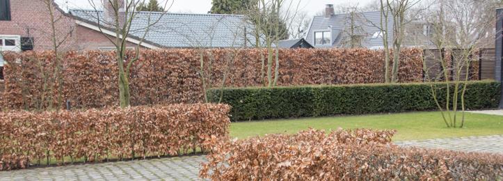 Haag bladverliezend