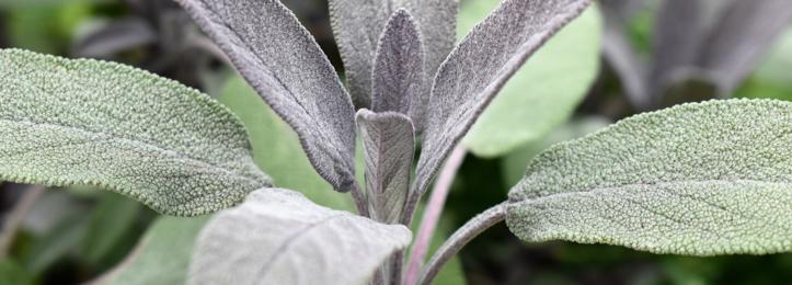 Vaste planten laag (0-1 meter hoog)