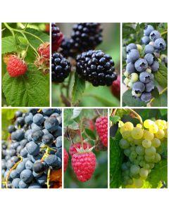 Gemengde fruittuin zoet fruit
